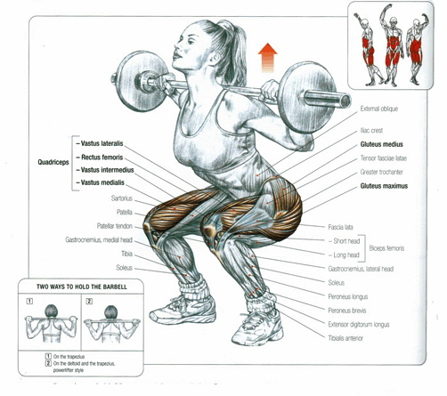 Muscles Involved in the Squat